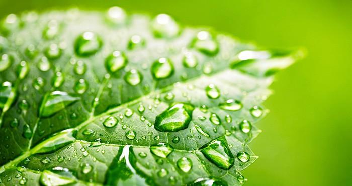 iStock_000016814539Medium_leaf