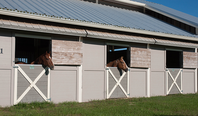 Horses looking out of Harmony, Florida's Equestrian Center