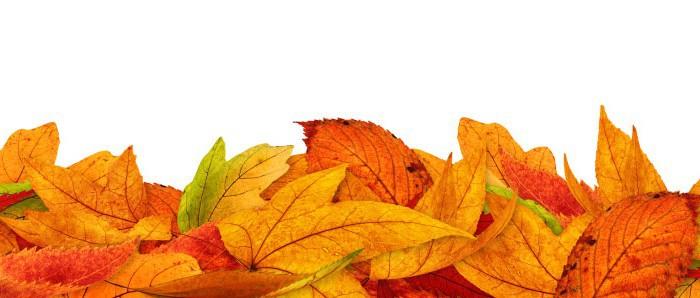 autumn1-700x298