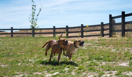 Terrain - Dog park