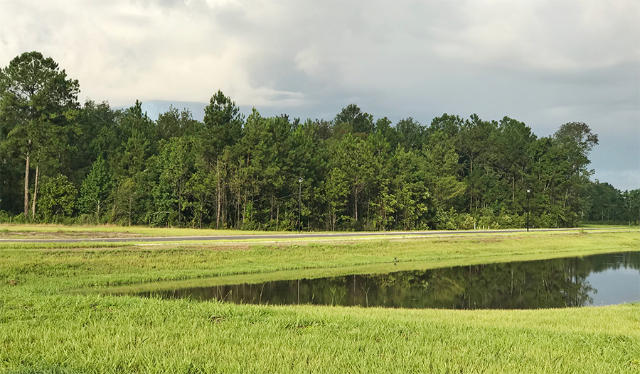 Pond at Osprey Landing in Jacksonville, FL