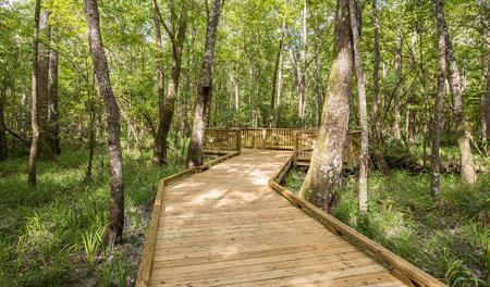 Walking path at Shearwater in Jacksonville