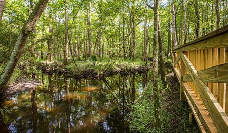 Marsh in Jacksonville